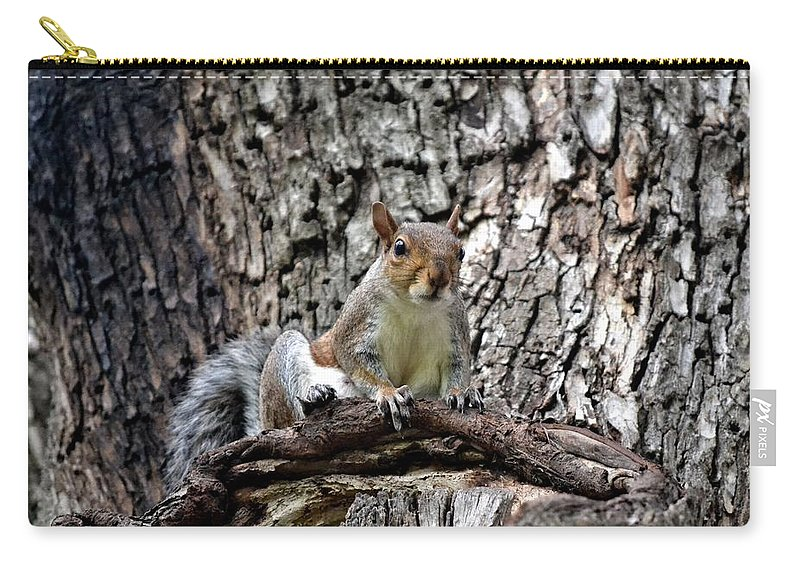Squirrel Carry-all Pouch featuring the photograph Squirrel by Tara Potts
