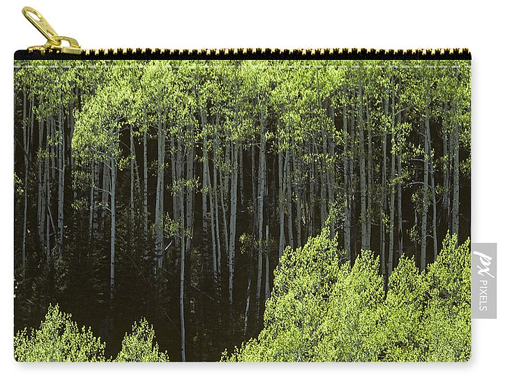 Nature Carry-all Pouch featuring the photograph Stand Of Birch Trees New Growth Spring Rich Green Leaves by Jim Corwin