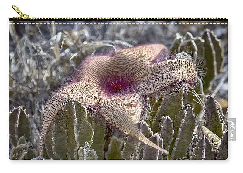Stapelia Hirsuta Flower Carry-all Pouch featuring the photograph Stapelia Hirsuta Flower-oahu Hawaii by Douglas Barnard