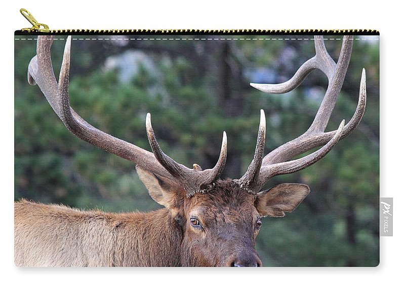 Elk Carry-all Pouch featuring the photograph Stare Down by Shane Bechler