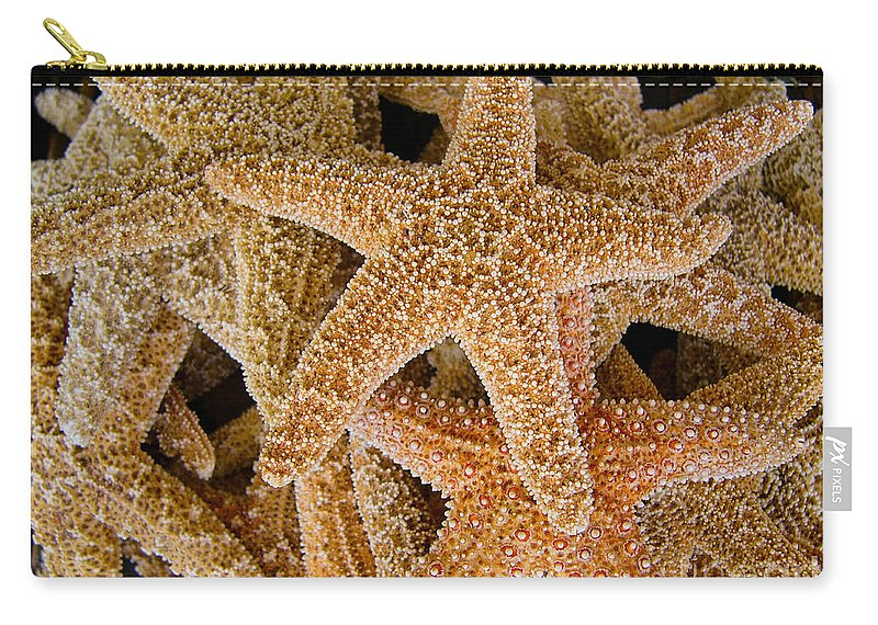 Starfish Carry-all Pouch featuring the photograph Starfish by Amy Cicconi