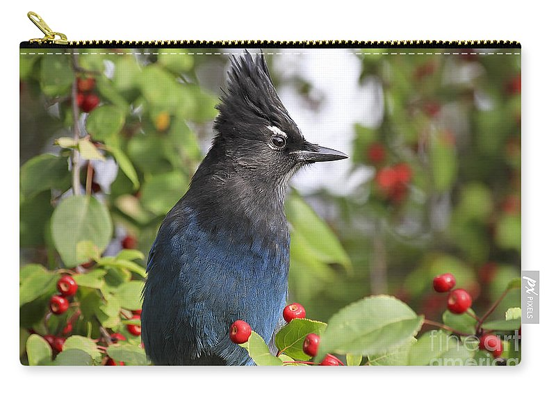 Bird Carry-all Pouch featuring the photograph Steller's Jay And Red Berries by Teresa Zieba