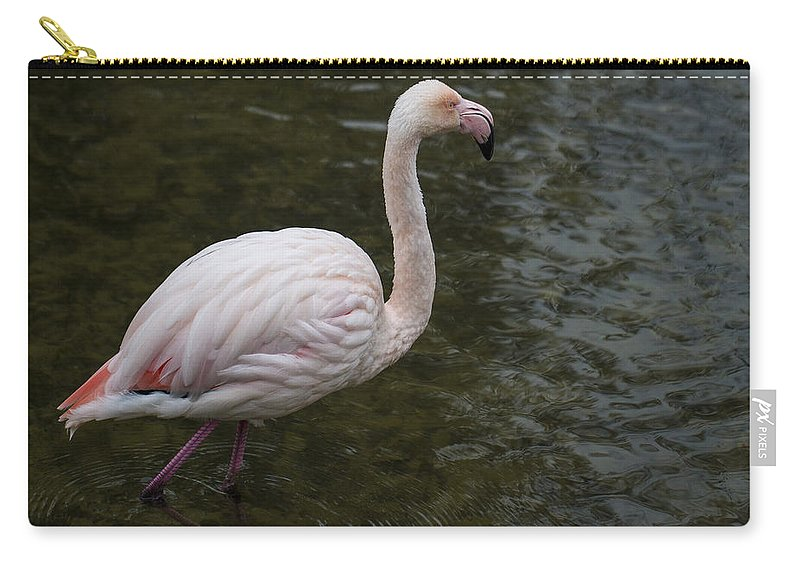 Clare Bambers Carry-all Pouch featuring the photograph Stepping Out. by Clare Bambers