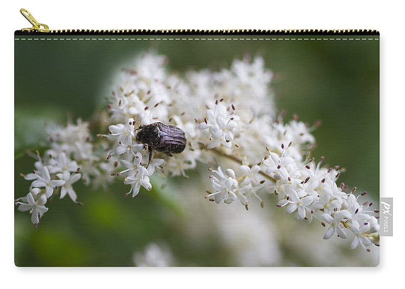 Stiff Dogwood Carry-all Pouch featuring the photograph Stiff Dogwood Wildflowers And Beetle by Kathy Clark