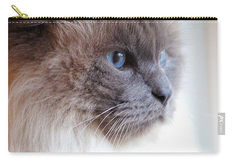 Cat Carry-all Pouch featuring the photograph Still Waiting by Cindy Johnston