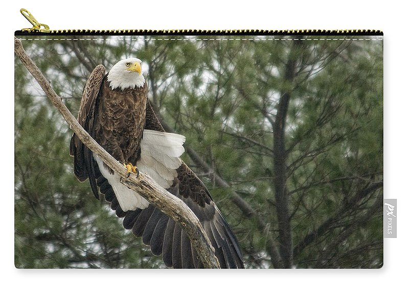 Eagle Carry-all Pouch featuring the photograph Stretching by Claudia Kuhn