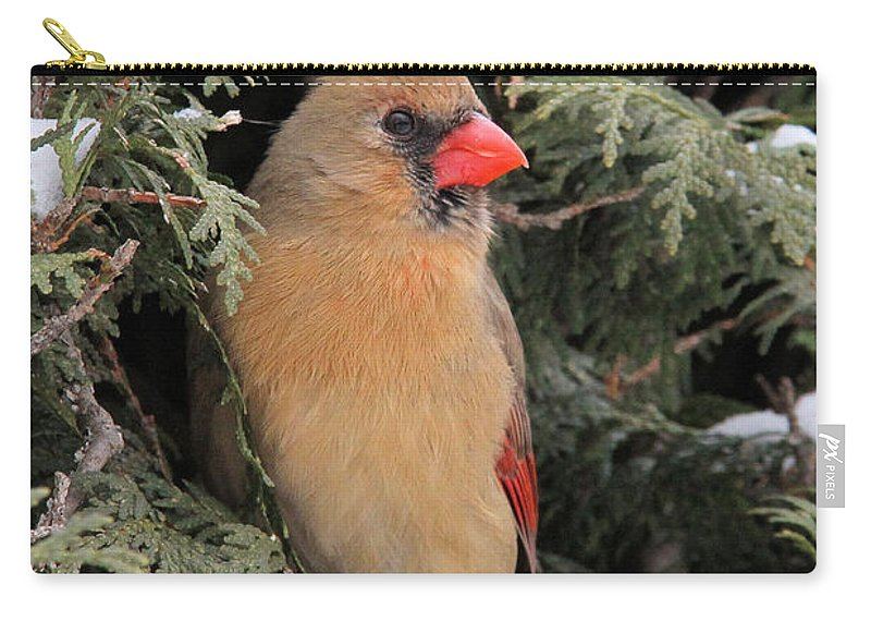 Cardinal Carry-all Pouch featuring the photograph Striking A Pose by Doris Potter