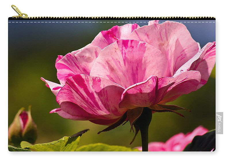 Rose Carry-all Pouch featuring the photograph Stripes On Roses by Jean Noren