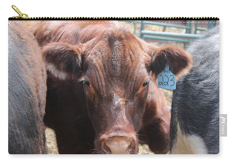 Steer Carry-all Pouch featuring the photograph Stuck In The Middle by Tiffany Erdman