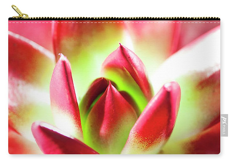 Cut Out Carry-all Pouch featuring the photograph Succulent Echeveria by Lrescigno
