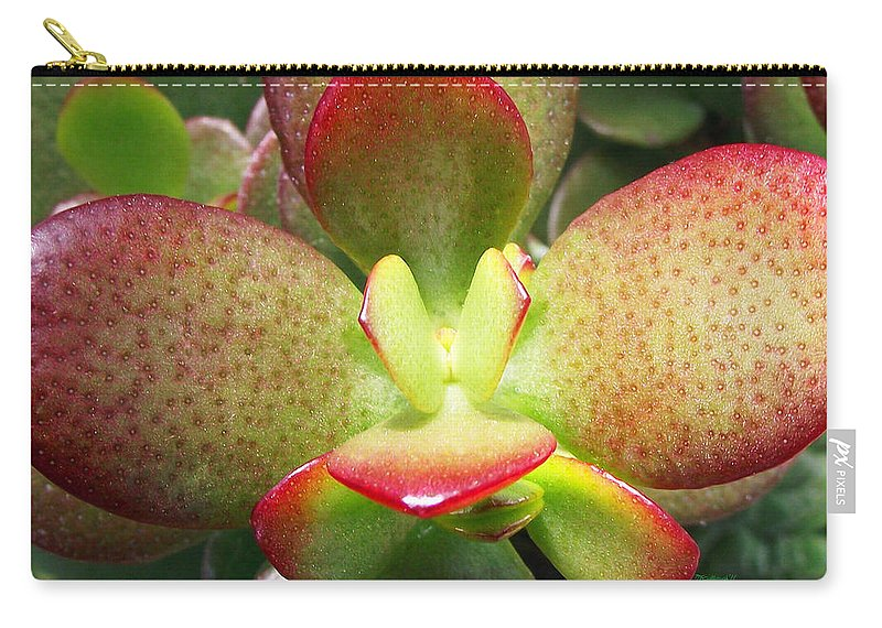 Plants Carry-all Pouch featuring the photograph Succulent Plant Upclose by Duane McCullough