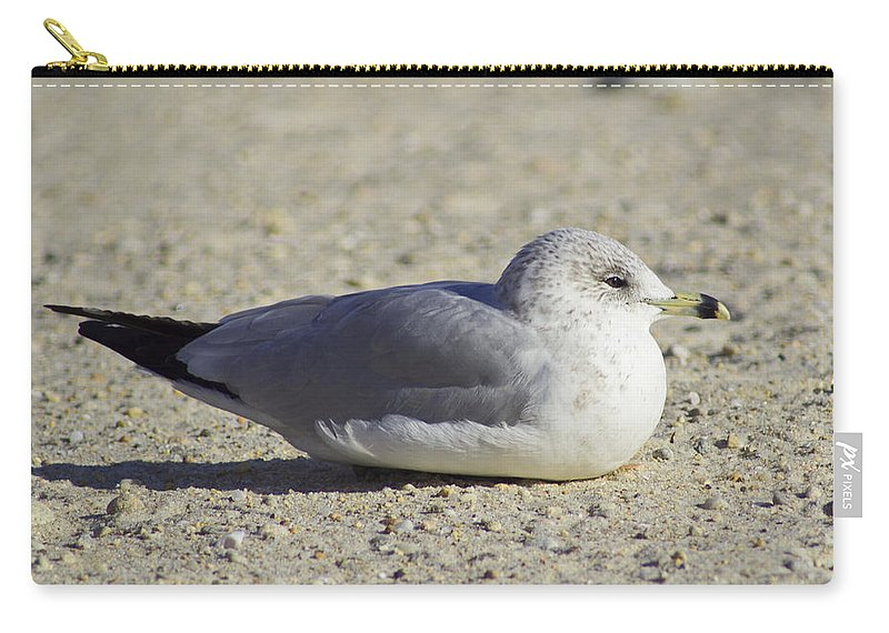 Bird Carry-all Pouch featuring the photograph Sun Soaked by Joe Geraci