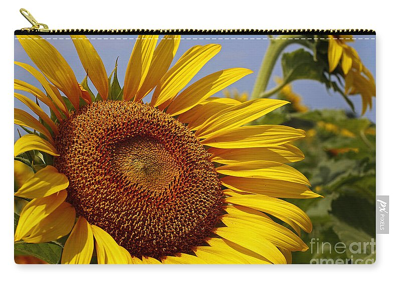 Sunflower Carry-all Pouch featuring the photograph Sun Worshipper by Barbara McMahon