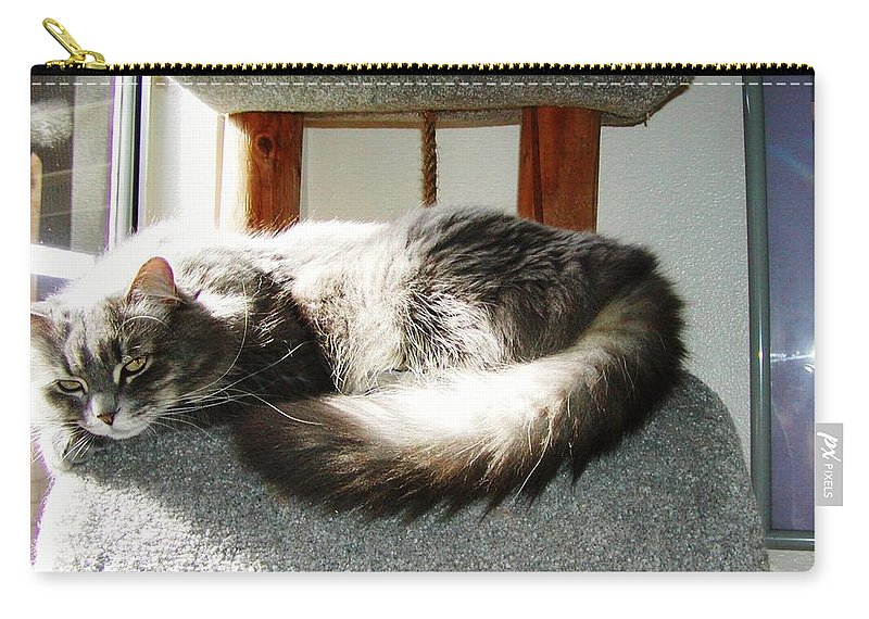 Cat Carry-all Pouch featuring the photograph Sunbath by Jussta Jussta