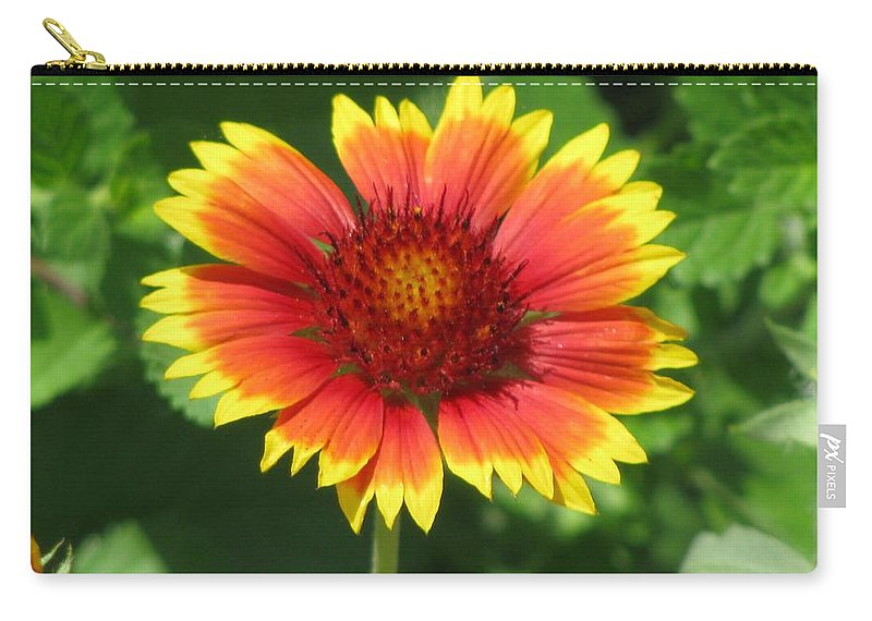 Flower Carry-all Pouch featuring the photograph Sunburst 03 by Pamela Critchlow