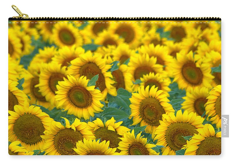 Sunflower Carry-all Pouch featuring the photograph Sunflower Explosion by Ronda Kimbrow