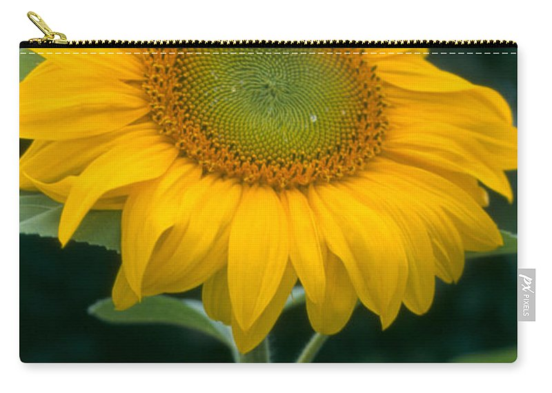 Flower Carry-all Pouch featuring the photograph Sunflower In Seattle by Heather Kirk