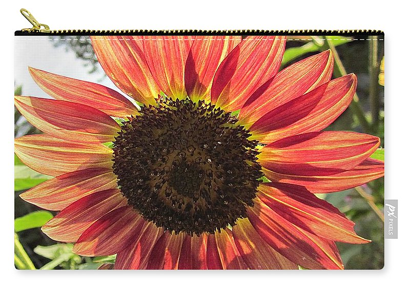 Autumn Beauty Sunflower Carry-all Pouch featuring the photograph Sunflower by MTBobbins Photography