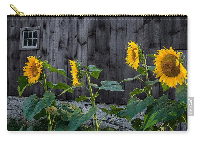 Sunflower Carry-all Pouch featuring the photograph Sunflower Quartet by Bill Wakeley