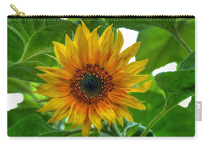 Sommer Carry-all Pouch featuring the pyrography Sunflower by Steffen Gierok