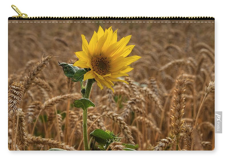Sommer Carry-all Pouch featuring the pyrography Sunflowers At Corny by Steffen Gierok