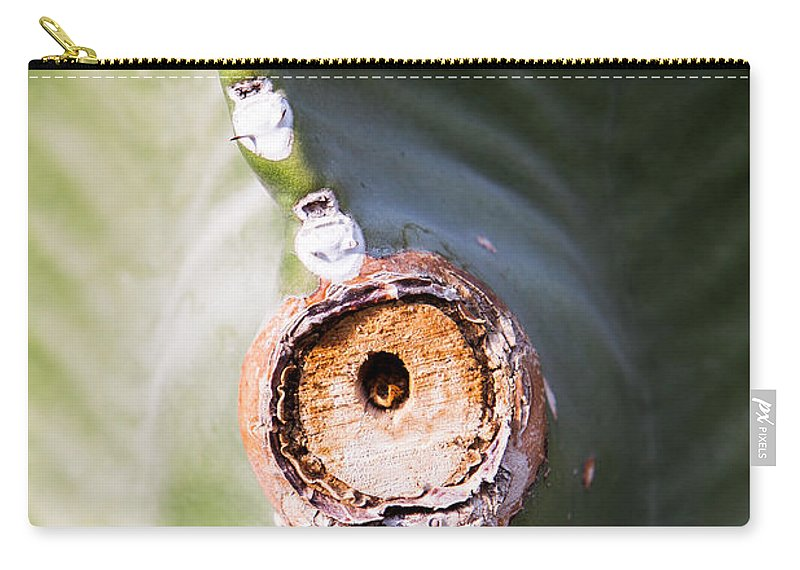 Botanical Carry-all Pouch featuring the photograph Sunlight Split On Cactus Knot by John Wadleigh