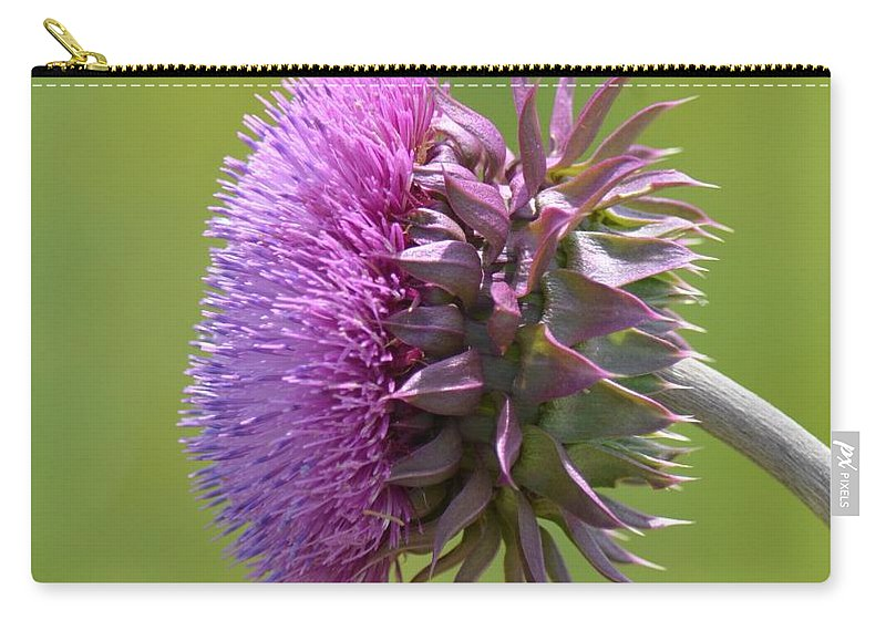 Sunlit Thistle Carry-all Pouch featuring the photograph Sunlit Thistle by Maria Urso
