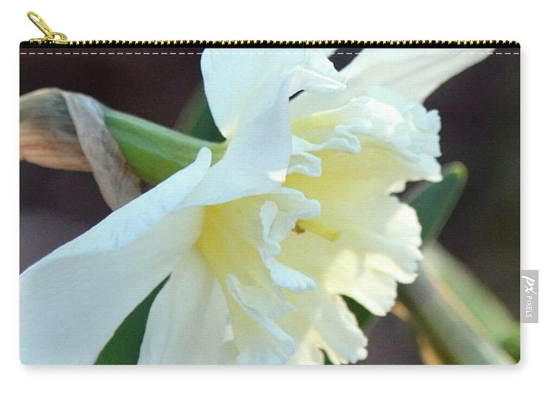 Sunlit White Daffodil Carry-all Pouch featuring the photograph Sunlit White Daffodil by Maria Urso