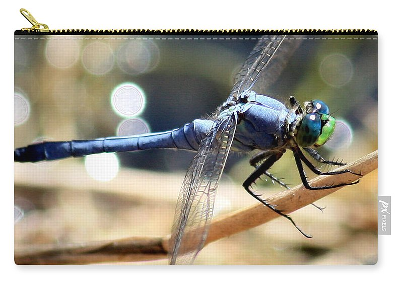 Dragonfly Carry-all Pouch featuring the photograph Sunning Blue Dragonfly Square by Carol Groenen