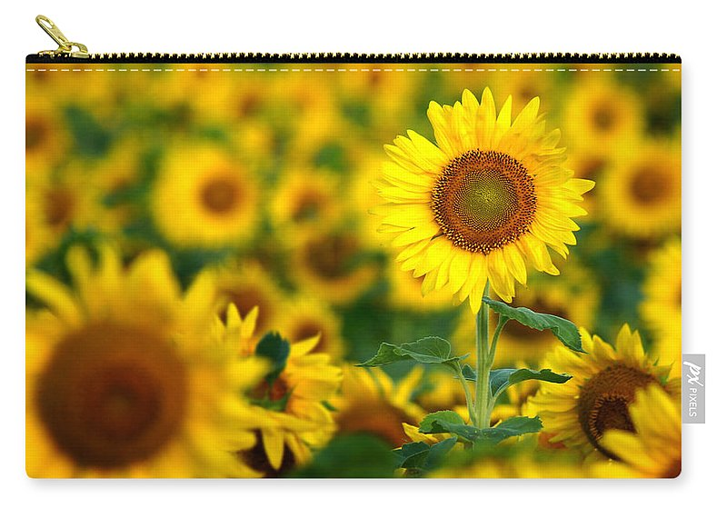 Yellow Carry-all Pouch featuring the photograph Sunny Delight by Bill Pevlor