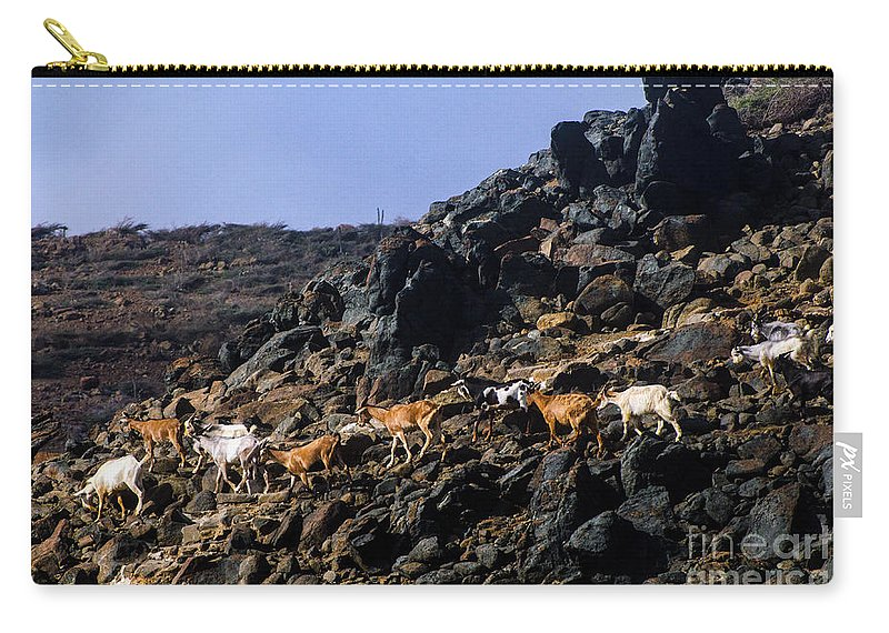 Aruba Carry-all Pouch featuring the photograph Sure Footed by Judy Wolinsky