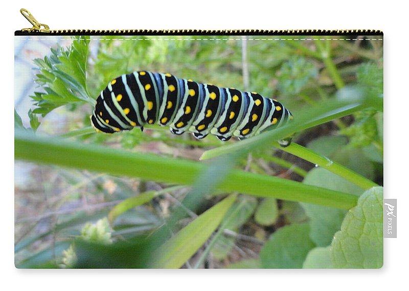 Swallowtail Caterpillar Carry-all Pouch featuring the photograph Swallowtail Caterpillar by Mike Breau