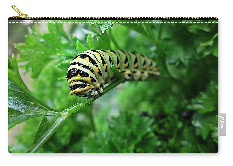 Swallowtail Caterpillar Carry-all Pouch featuring the photograph Swallowtail Caterpillar by MTBobbins Photography