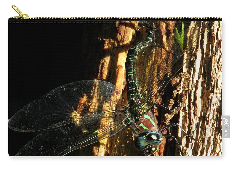 Swamp Darner Dragonfly Laying Eggs Big Dragonfly Giant Dragonfly Black Dragonfly With Green Stripes Chesapeake Dragonfly Species Carry-all Pouch featuring the photograph Swamp Darner by Joshua Bales