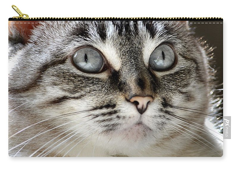 Cat Carry-all Pouch featuring the photograph Sweet Innocence by Deb Halloran