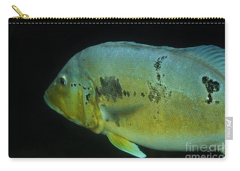 Fish Carry-all Pouch featuring the photograph Swimming by Tonya Hance
