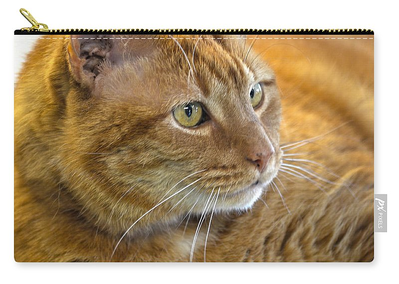 Cat Carry-all Pouch featuring the photograph Tabby Cat Portrait by Sandi OReilly