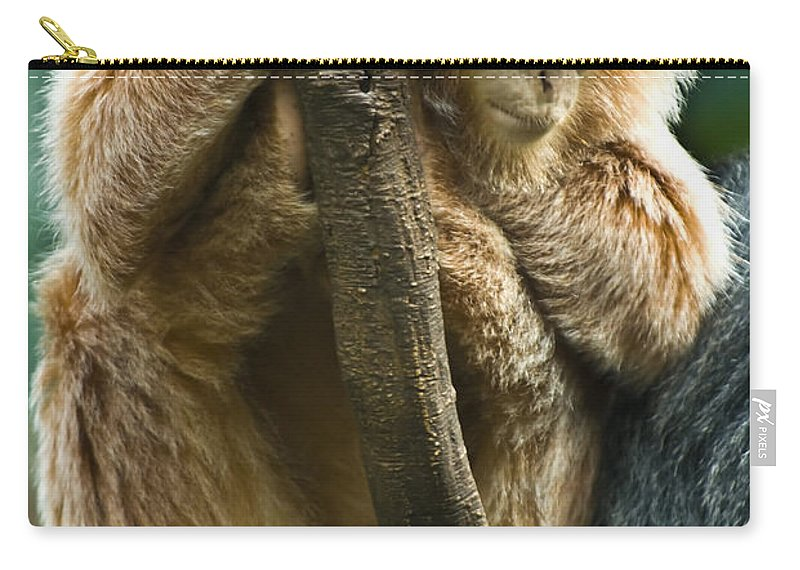 Ape Carry-all Pouch featuring the photograph Taking A Nap by Anthony Sacco