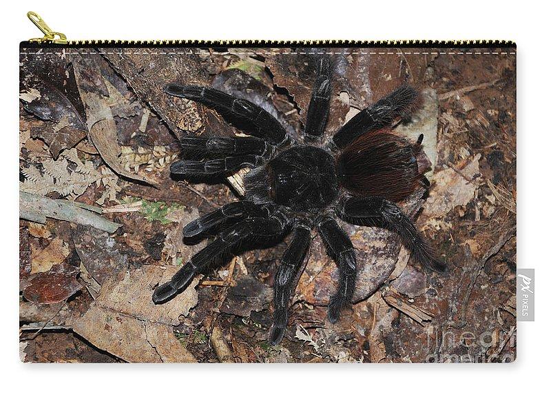 Tarantula Carry-all Pouch featuring the photograph Tarantula Amazon Brazil by Bob Christopher