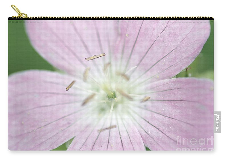 Texas Baby Blue Eyes Carry-all Pouch featuring the photograph Texas Baby Blue Eyes Nemophila Phacelioides by Optical Playground By MP Ray