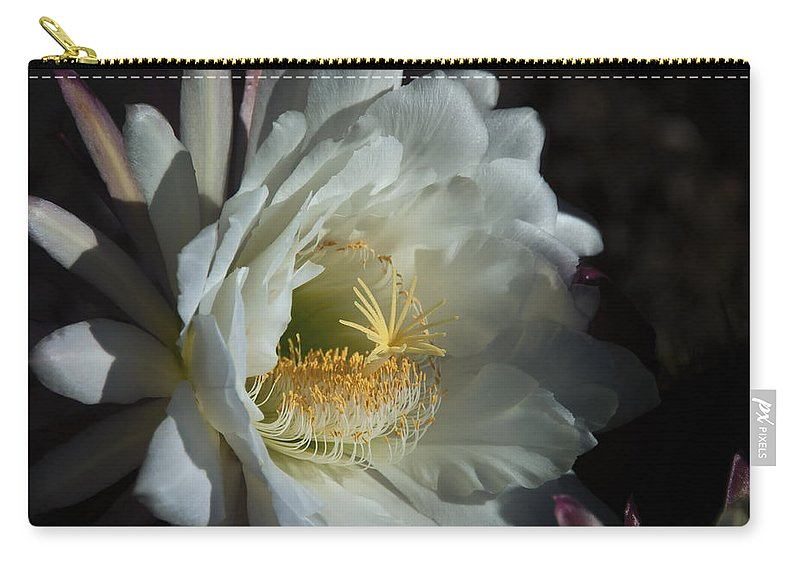 Torch Cactus Carry-all Pouch featuring the photograph The Argentine Giant by Saija Lehtonen