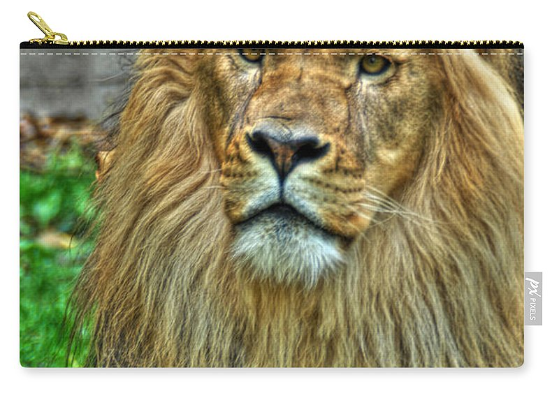 Lion Carry-all Pouch featuring the photograph The Attentive Lazy Boy At The Buffalo Zoo by Michael Frank Jr