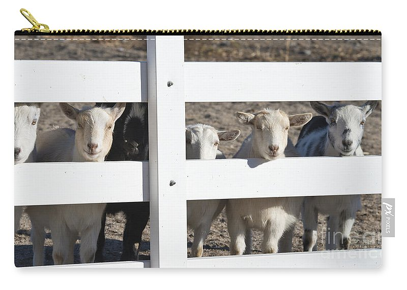 Goats Carry-all Pouch featuring the photograph The Audience by Dianne Phelps