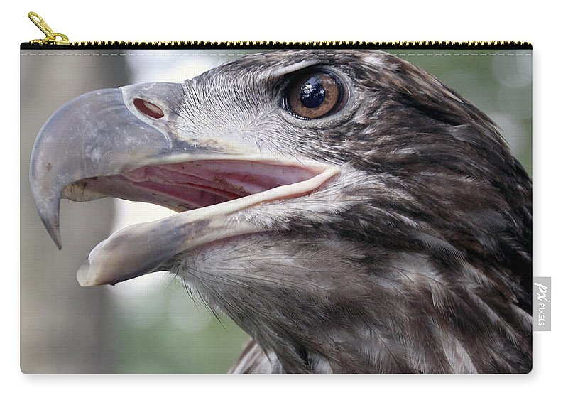 Beak Carry-all Pouch featuring the photograph The Beak Of A Preator by Bob Slitzan