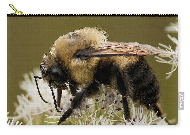 Festblues Carry-all Pouch featuring the photograph The Bumble Bee.. by Nina Stavlund