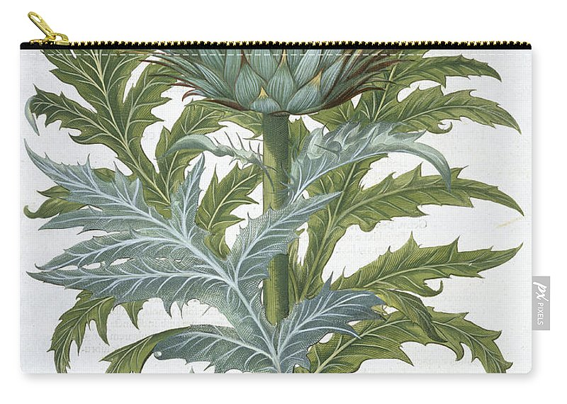 Cynara Cardunclus Carry-all Pouch featuring the drawing The Cardoon, From The Hortus by German School