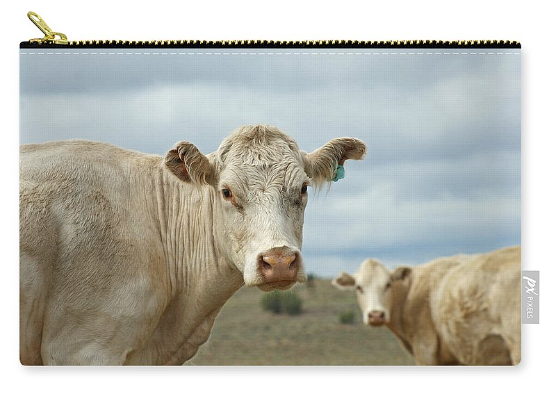 Cow Carry-all Pouch featuring the photograph The Cows by Ernie Echols