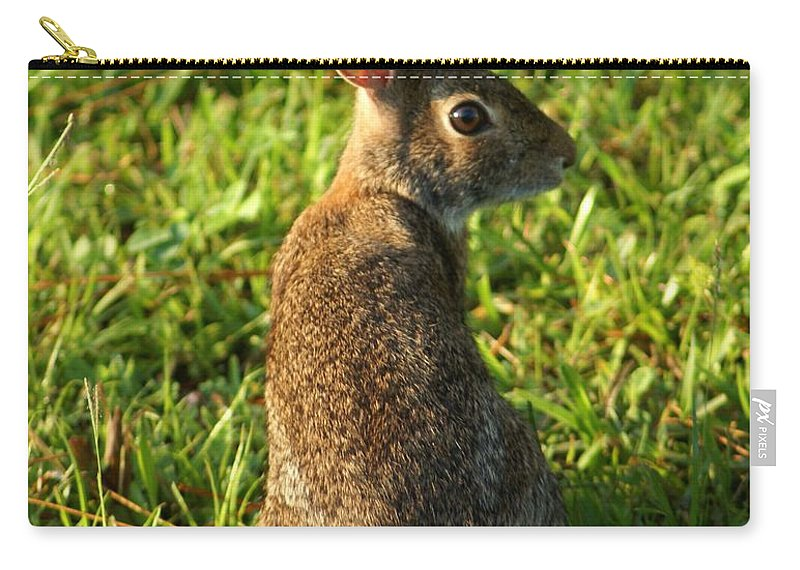 Bunny Carry-all Pouch featuring the photograph The Curious Rabbit by Patricia Twardzik