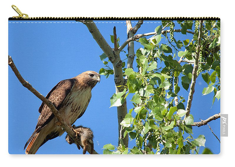 Hawk Photograph Carry-all Pouch featuring the photograph Predator And Prey by Jim Garrison