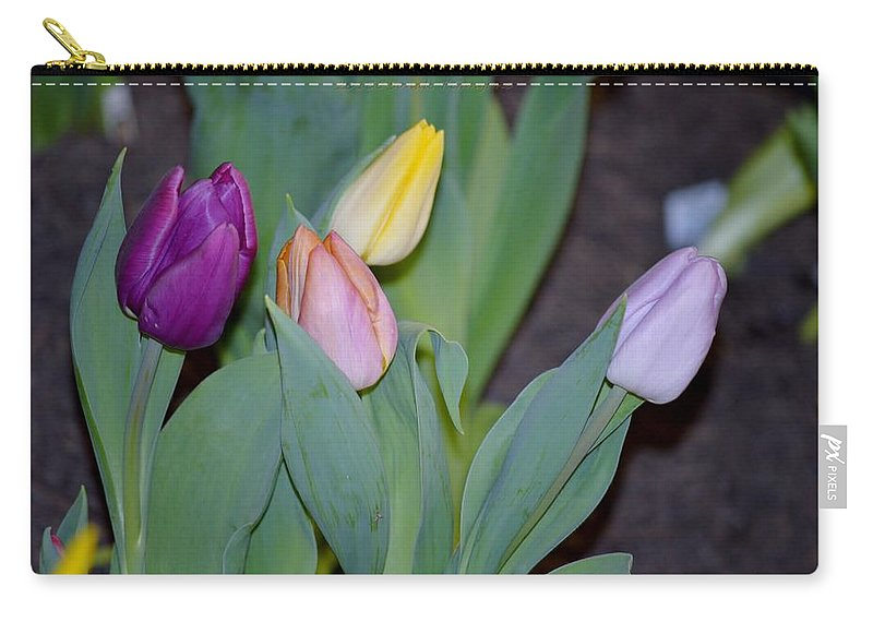 The Four Tulips Carry-all Pouch featuring the photograph The Four Colours by Sonali Gangane
